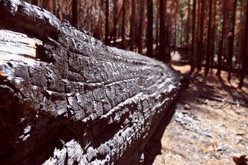 After the forest fire in Yosemite