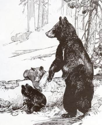 Yosemite Black Bear Mother And Her Cubs. From Furry Friends Of Yosemite.