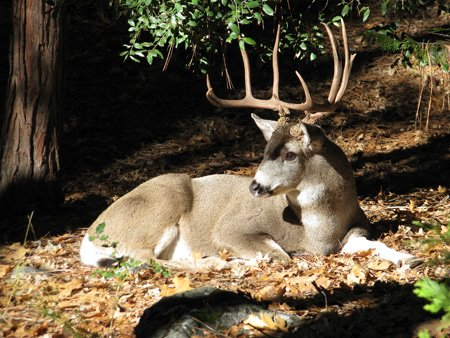 Wildlife are more plentiful in the higher elevations.
