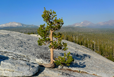 On Lembert Dome in Yosemite National Park