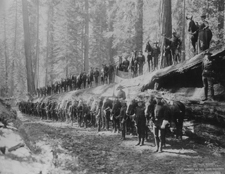 The US Cavalry in Wawona