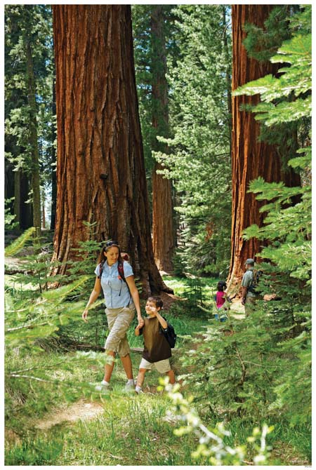 Wawona's Big Trees the Mariposa Grove