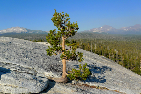 On Yosemite's Lembert Dome