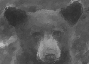 Yosemite Bear through the glass. DH Hubbard collection.