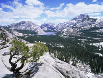 Tenaya Lake From Olmstead Point. AllPosters.com