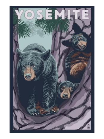 Yosemite Black Bears-AllPosters.com