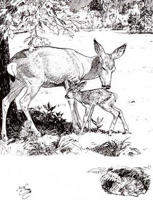 Mother Mule Deer And Baby In Yosemite...Bill Berry