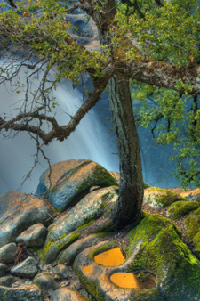 Yosemite Serenity Tree With Water-AllPosters.com