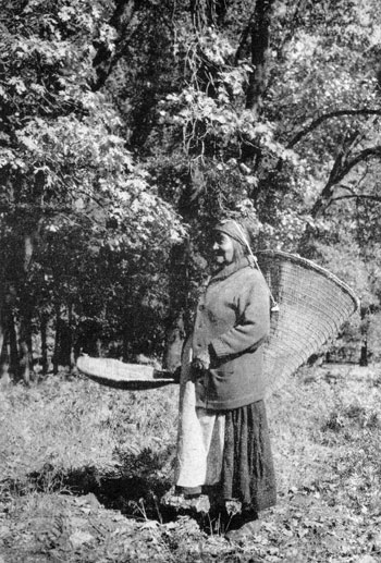 Tabuce gathering acorns with her conical basket