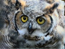 The call of the Owl gave Wawona it's name