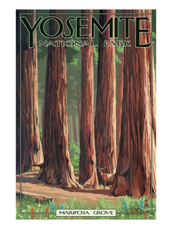 The Mariposa Grove Of Big Trees-Yosemite-AllPosters.com